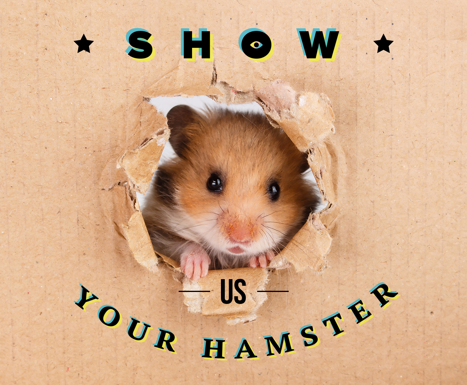 1000 USD For Your Hamster`s Photo!